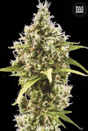 Kvalitetno sjeme za biljke pomoći će u boljem uzgoju