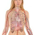 Čišćenje masne jetre prirodnim putem